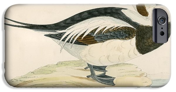 Birds iPhone Cases - Long Tailed Duck iPhone Case by Beverley R. Morris