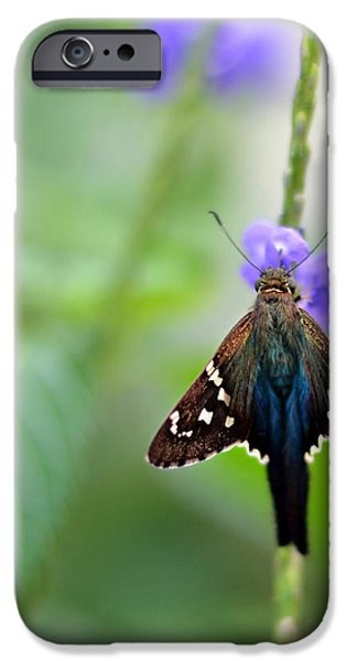 long tailed skipper iPhone Case by Laura  Fasulo