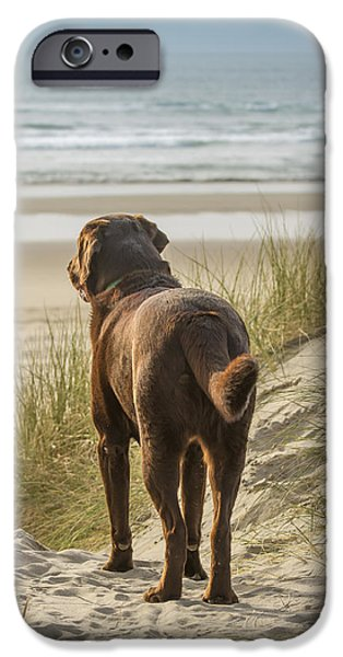 Chocolate Lab iPhone Cases - Longing iPhone Case by Jean Noren