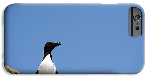 Razorbill iPhone Cases - Look At Me iPhone Case by Anne Gilbert