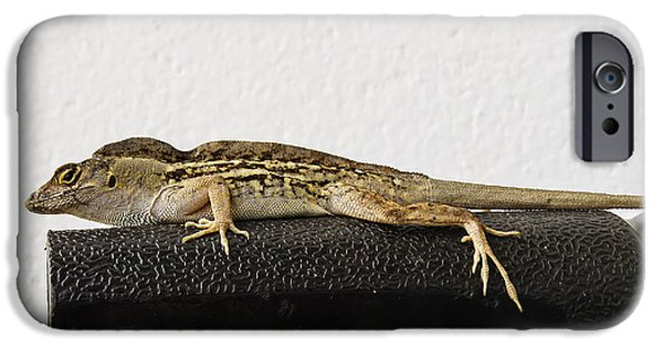 Florida Wildlife iPhone Cases - Look At Me iPhone Case by Zina Stromberg