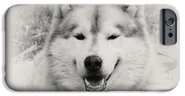 Huskies iPhone Cases - Look at That Face iPhone Case by Gena Weiser