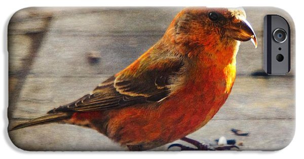 Crossbill iPhone Cases - Look - Im a Crossbill iPhone Case by Robert L Jackson