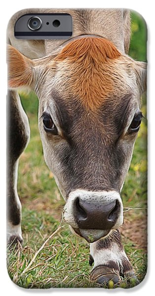 Moo Moo iPhone Cases - Look Into My Eyes - Jersey Cow - Square iPhone Case by Gill Billington