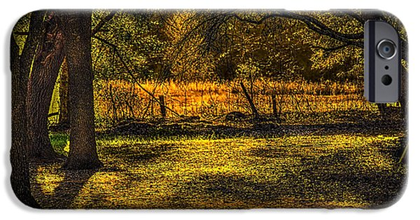 Forest iPhone Cases - Look into the Golden Light iPhone Case by Marvin Spates