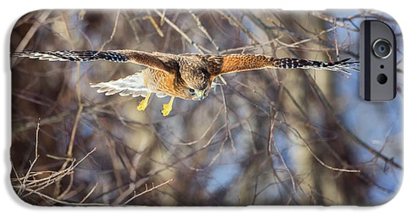 Hawk iPhone Cases - Look Out Below iPhone Case by Bill  Wakeley