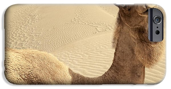 SAHARA iPhone Cases - Looking At Ya iPhone Case by Lourry Legarde