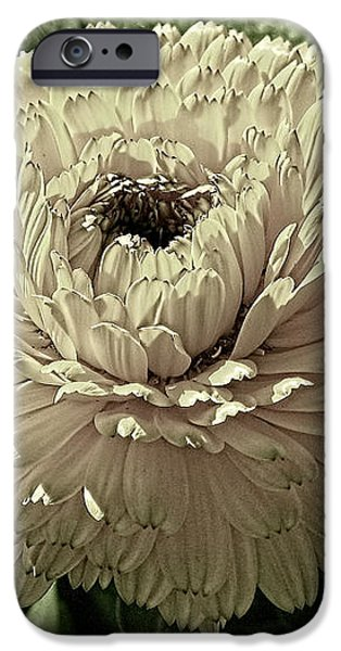 Looking Back iPhone Case by Wendy J St Christopher