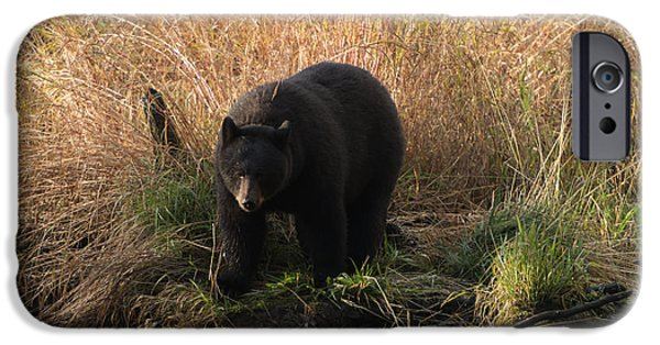 Black Bear iPhone Cases - Looking for a Meal iPhone Case by Mike  Dawson