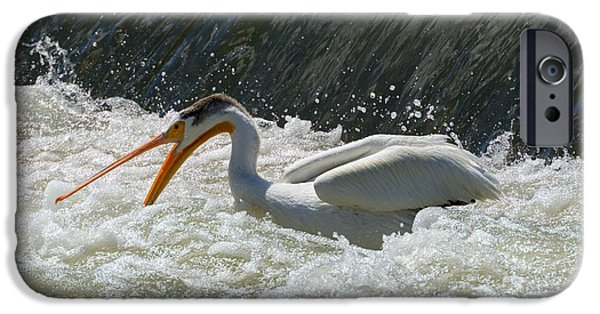 Pelicans iPhone Cases - Looking for Dinner iPhone Case by Mike  Dawson