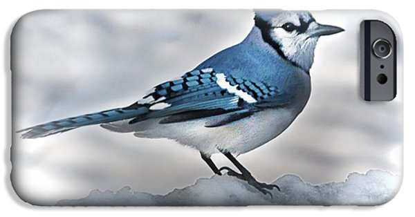 Bluejay iPhone Cases - Looking For Food iPhone Case by Arnie Goldstein