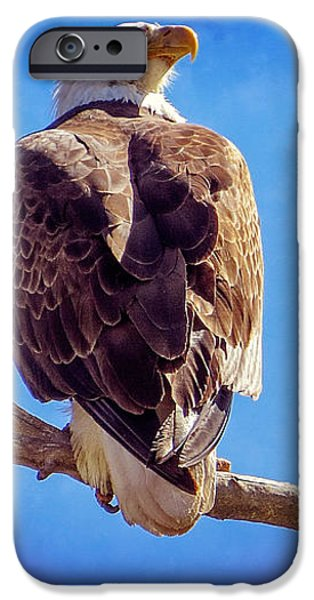 Looking Right iPhone Case by Bob Hislop