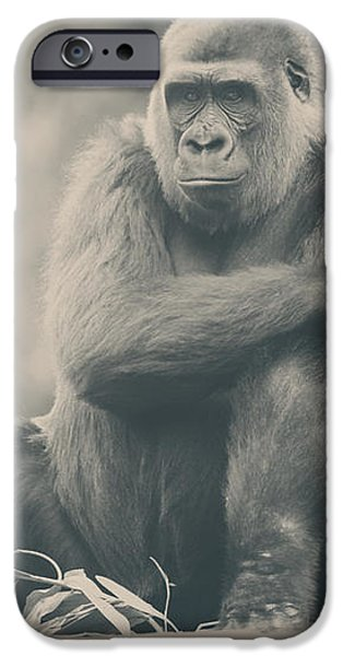 Looking So Sad iPhone Case by Laurie Search