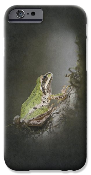 Light And Dark  iPhone Cases - Looking Up iPhone Case by Angie Vogel