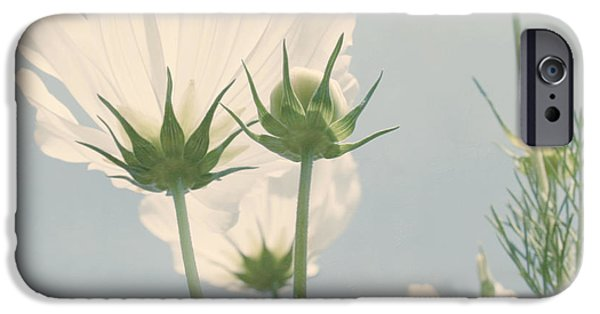 Kim Photographs iPhone Cases - Looking Up iPhone Case by Kim Hojnacki