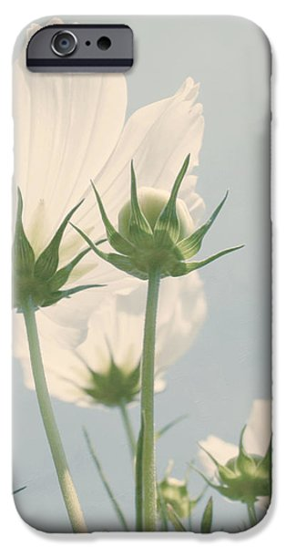 Looking Up iPhone Case by Kim Hojnacki