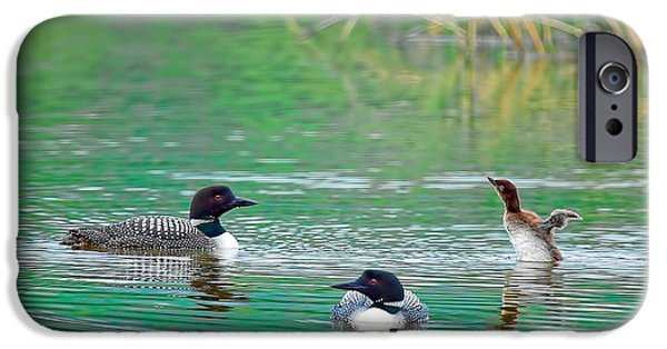 Loon iPhone Cases - Loon Family iPhone Case by Donna Caplinger