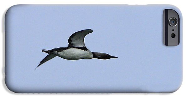 Flight Pyrography iPhone Cases - Loon on the Wing iPhone Case by Shoal Hollingsworth