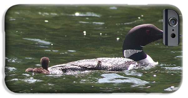 Maine iPhone Cases - Loon with baby 3 iPhone Case by Joseph Marquis