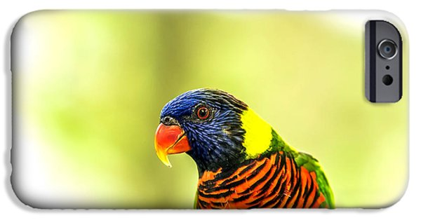 Cut-outs iPhone Cases - Lorikeet iPhone Case by Jijo George