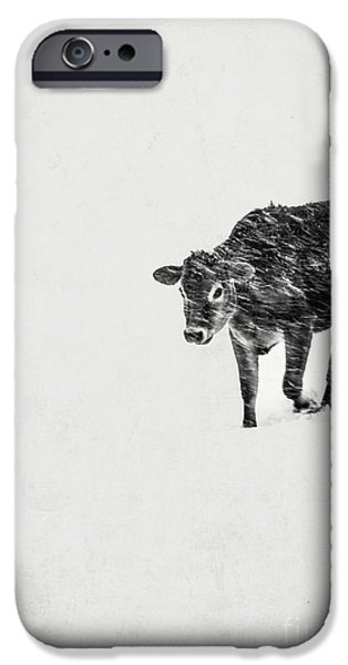 Winter Storm iPhone Cases - Lost calf struggling in a snow storm iPhone Case by Edward Fielding