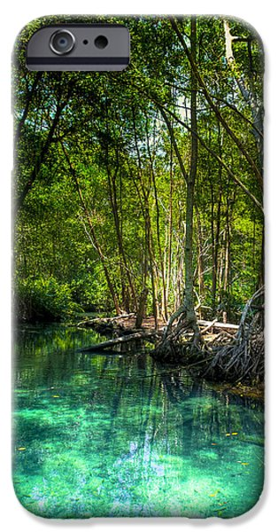 Recently Sold -  - Mangrove Forest iPhone Cases - Lost Lagoon On The Yucatan Coast iPhone Case by Mark Tisdale