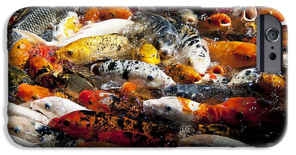 Butterfly Koi iPhone Cases - Lots of Hungry Koi  iPhone Case by Wilma  Birdwell