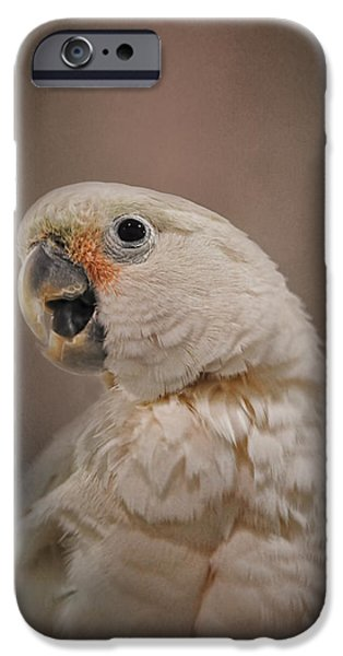 Cockatoo iPhone Cases - Lots to Say iPhone Case by Jai Johnson