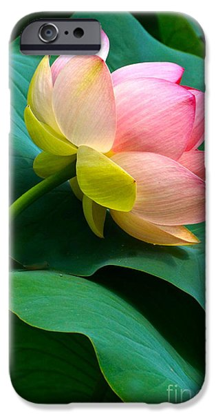 Lotus Blossom And Leaves iPhone Case by Byron Varvarigos