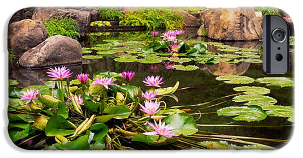 Garden Scene iPhone Cases - Lotus Blossoms, Japanese Garden iPhone Case by Panoramic Images