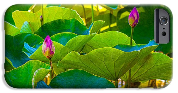 Business Photographs iPhone Cases - Lotus Garden iPhone Case by Roselynne Broussard