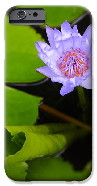 Flora iPhone Cases - Lotus Flower and Lily Pad iPhone Case by Adam Romanowicz