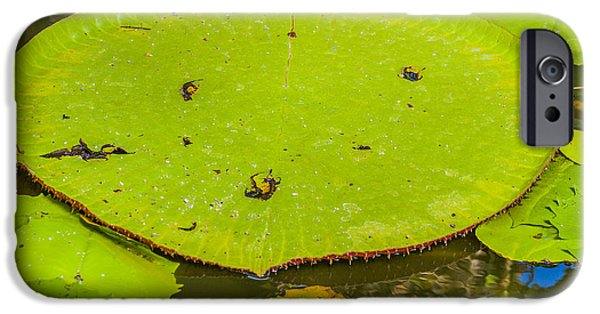 Nature Abstract iPhone Cases - Lotus leaf iPhone Case by Patricia Hofmeester