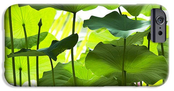 Botanical iPhone Cases - Lotus Leaves iPhone Case by Tim Gainey
