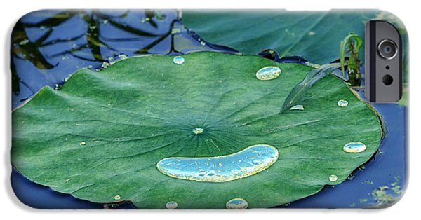 Concord Massachusetts iPhone Cases - Lotus Picture of Happiness iPhone Case by Sylvia J Zarco