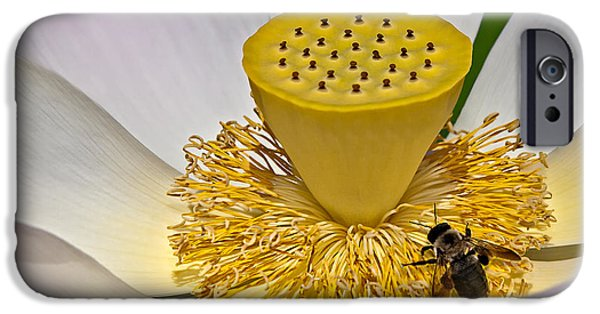 Botanical iPhone Cases - Lotus Pollinator iPhone Case by Susan Candelario