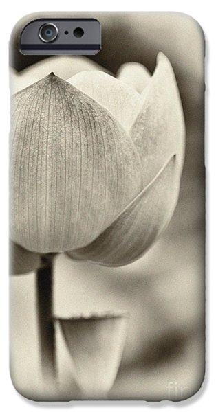 Aquatic Plants iPhone Cases - Lotus iPhone Case by Tim Gainey