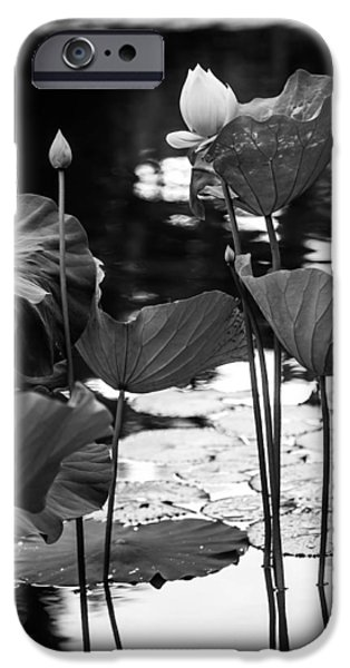 Lotuses in the Pond I. Black and White iPhone Case by Jenny Rainbow