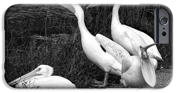 Caption iPhone Cases - Loud Mouth - Pelicans - Black and White iPhone Case by Nikolyn McDonald