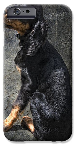 Gordon Setter iPhone Cases - Louis iPhone Case by Joachim G Pinkawa