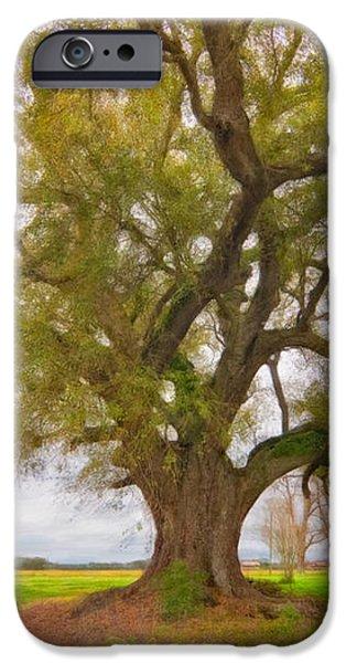 Louisiana Dreamin' iPhone Case by Steve Harrington