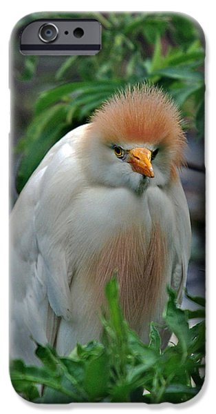 Cattle Egret iPhone Cases - Lovable Little Fuzzball iPhone Case by Skip Willits