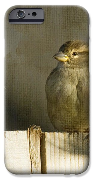 Love Birds iPhone Case by Rebecca Cozart