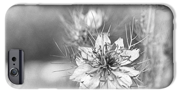 Floral Photographs iPhone Cases - Love in a Mist iPhone Case by Caitlyn  Grasso