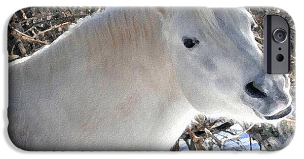 Wintertime iPhone Cases - Love is...Paso Fino Stallion Smiles  iPhone Case by Patricia Keller