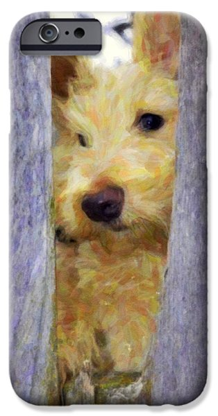 Scottish Terrier Puppy iPhone Cases - Love Me iPhone Case by Image Takers Photography LLC - Laura Morgan