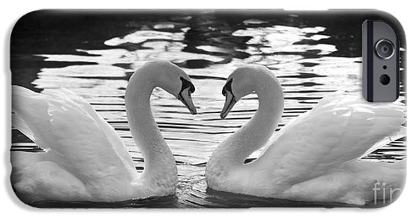 Swans... iPhone Cases - Love Swans iPhone Case by Brandon Alms