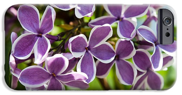 Purple Sensation iPhone Cases - Lovely Lilacs iPhone Case by Joann Copeland-Paul