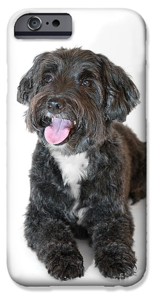 Canine Prints Digital iPhone Cases - Lovely Long Haired Dog iPhone Case by Natalie Kinnear