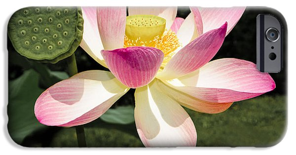 Botanical Photographs iPhone Cases - Lovely Lotus Blossom iPhone Case by Penny Lisowski